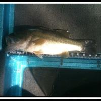 Caddo Lake Fishing Report 05/21/2014