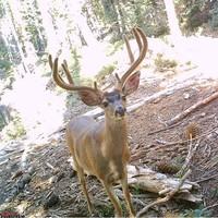 Plumas County Hunting Report 09/19/2017