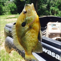 Other Freshwater Fishing Report 06/28/2014