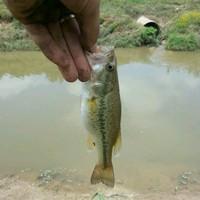 Greens Bayou Fishing Report 04/23/2015