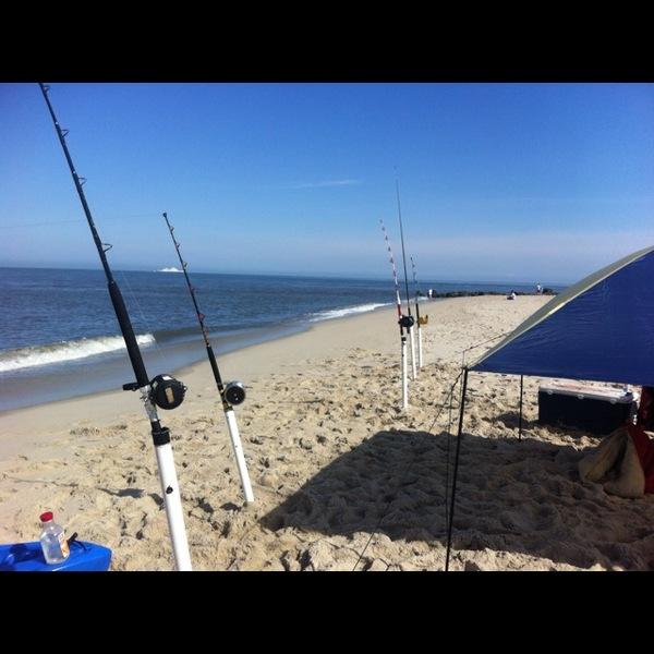 Bull shark delaware bay de nj fishingscout for Delaware bay fishing report