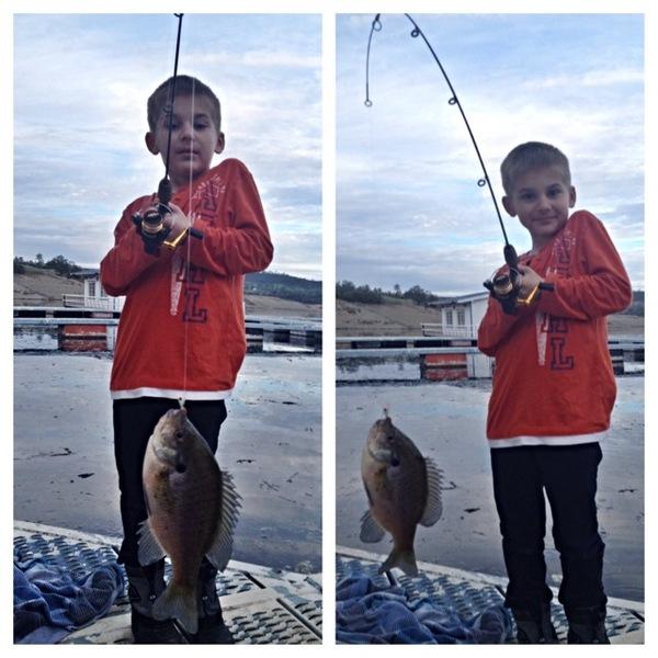 Bluegill sunfish lake amador ca fishingscout for Lake amador fishing report