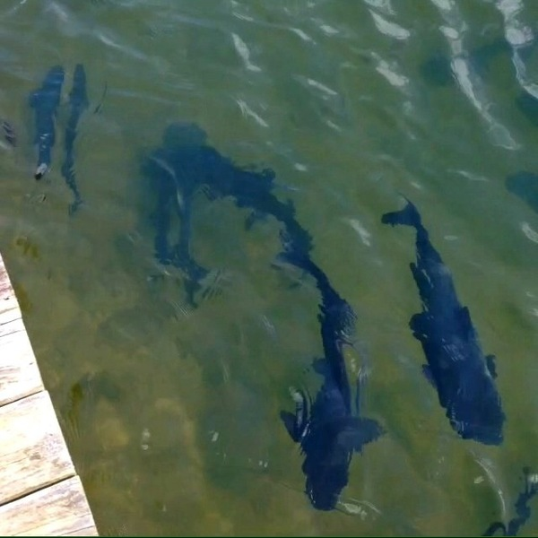 Eagle Lake Fishing Report 10/14/2014