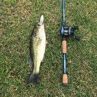 Mississippi River Fishing Report 06/12/2017