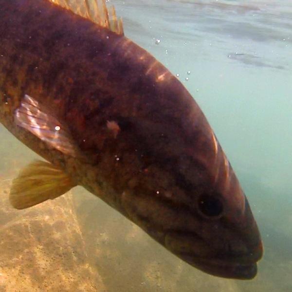 Devil's River Fishing Report 03/13/2014