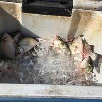 Lake Livingston Fishing Report 07/13/2016