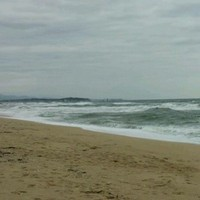 Other saltwater, South Korea Fishing Report 10/22/2014