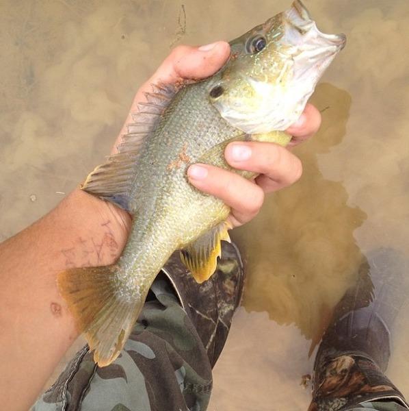 Oakwood Ponds Fishing Report 08/17/2015