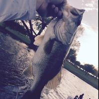 Old Settler's Lake Fishing Report 04/14/2015