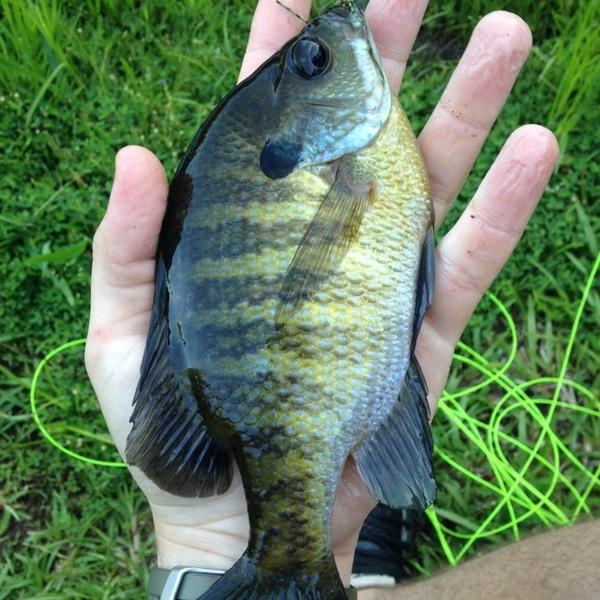 Mud Creek Fishing Report 05/17/2014