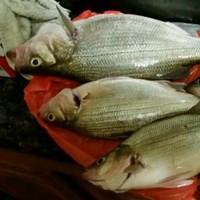 Lake Anahuac Fishing Report 02/01/2016