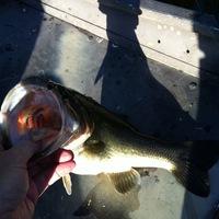 Lake Jacksonville Fishing Report 04/21/2014