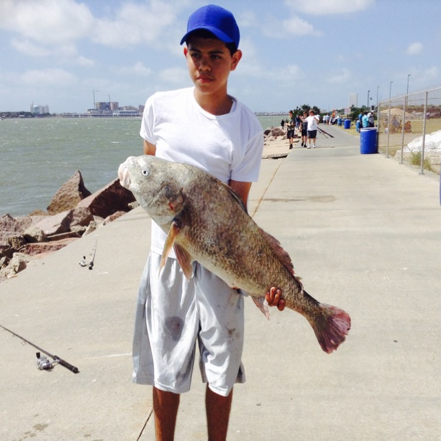 Black drum galveston bay complex other tx fishingscout for Galveston fishing reports