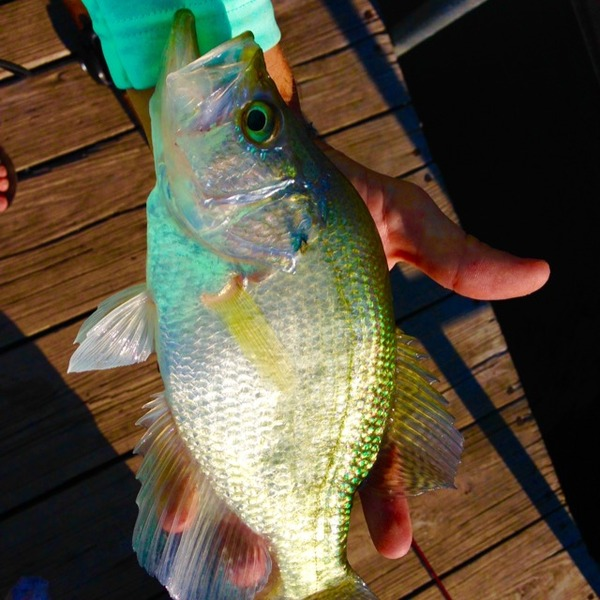 Canyon Lake Fishing Report 09/22/2015