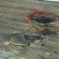 Fishingscout mobile app california fishing reports for Dana point pier fishing