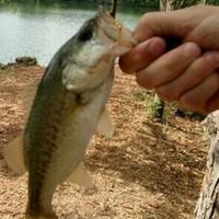 San Gabriel River Fishing Report 04/11/2016