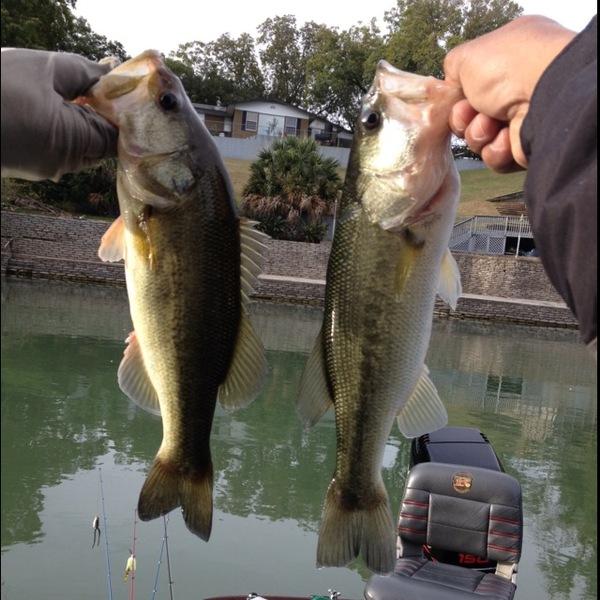 Comal River Fishing Report 11/08/2013