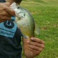 Lubbock Ponds Fishing Report 08/29/2015