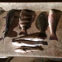 Port O'Connor  Fishing Report 11/21/2016