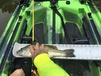 Lake Bastrop Fishing Report 04/26/2016