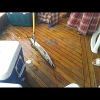 Other Saltwater Fishing Report 04/25/2013