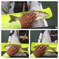 Lake Dunlap Fishing Report 11/28/2015