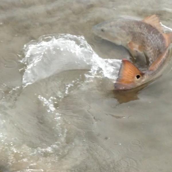 Oso Bay Fishing Report 02/10/2014