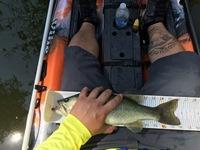 Lake Bastrop Fishing Report 03/28/2016