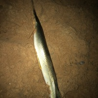 Lake Texoma Fishing Report 08/26/2017