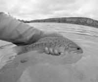 Devil's River Fishing Report 06/06/2015