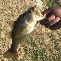 Martin Creek Lake Fishing Report 01/30/2016