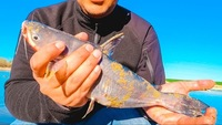 Lake Livingston Fishing Report 03/14/2017