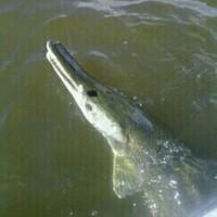 Sabine River Fishing Report 10/05/2014