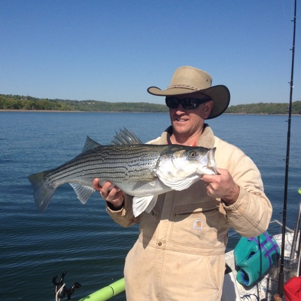 Striped bass beaver lake ar fishingscout for Beaver lake striper fishing