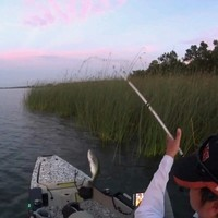 Lake Bastrop Fishing Report 08/08/2016