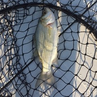 Lost River Fishing Report 07/27/2016