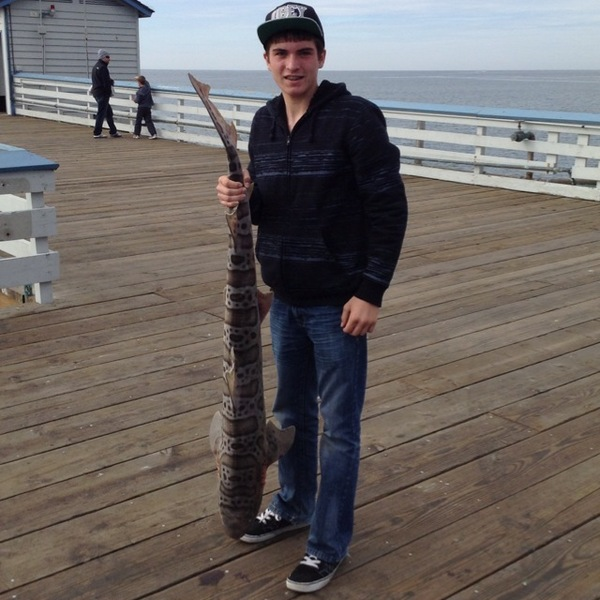 San clemente pier fishing reports fishingscout mobile app for Pier fishing san diego