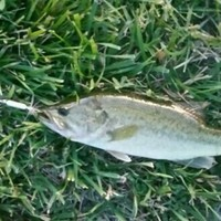 Russell Creek Pond Fishing Report 06/24/2016