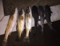 Calaveras Lake Fishing Report 11/12/2016