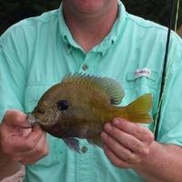 Damon's Seven Lakes Fishing Report 05/10/2014