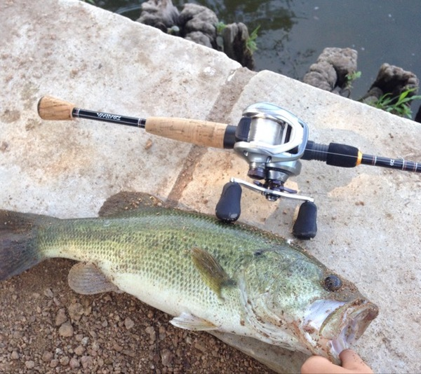Lady Bird Lake Fishing Report 06/28/2016