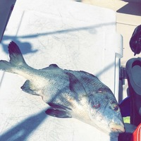 Other Saltwater Fishing Report 06/02/2016