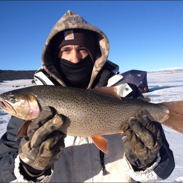 Elevenmile canyon reservoir fishing reports fishingscout for Eleven mile canyon fishing report