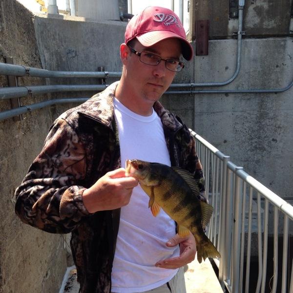 Yellow perch lake onalaska wi fishingscout for Lake onalaska fishing report