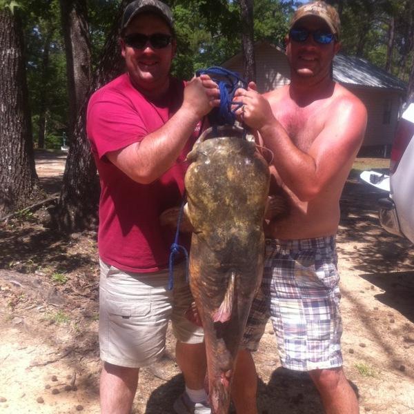 Flathead catfish toledo bend reservoir tx la for Toledo bend fishing reports