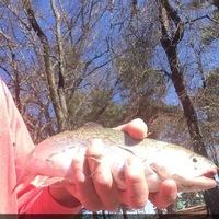Tyler Ponds Fishing Report 01/18/2016