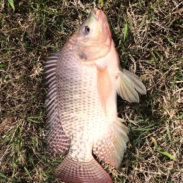 Spring Ponds Fishing Report 03/19/2017