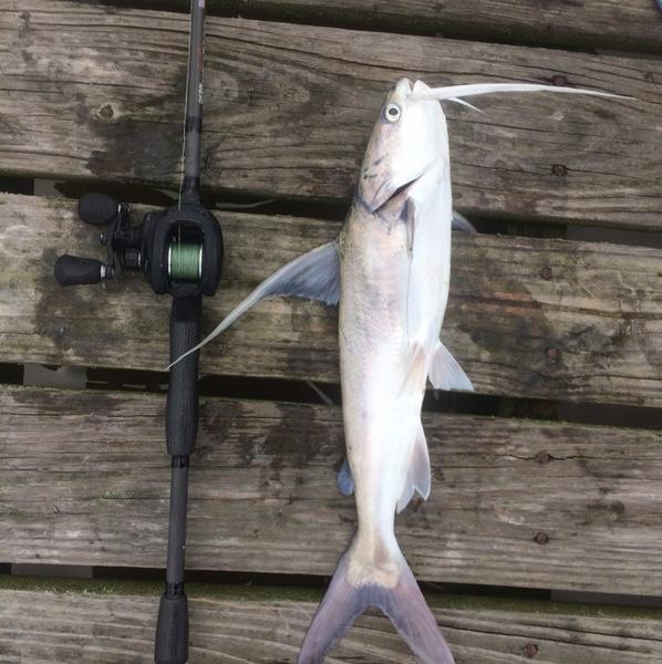 Bay St Louis Fishing Report 07/08/2017
