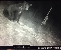 Pender County Hunting Report 08/12/2017