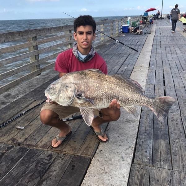 Black drum galveston island beach tx fishingscout for Galveston fishing report